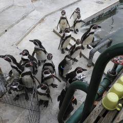 羽村市動物公園張用戶圖片