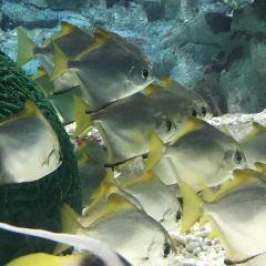 Asamushi Aquarium User Photo