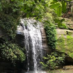 Buderim Forest Park User Photo