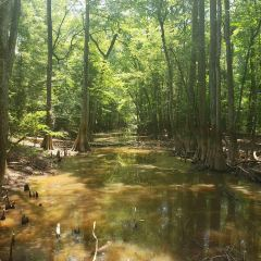 Congaree National Park User Photo