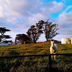 New Plymouth Coastal Walkway User Photo