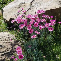 Ohme Gardens User Photo