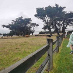 Churchill Island Heritage Farm User Photo