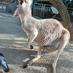 可倫賓野生動物保護區用戶圖片