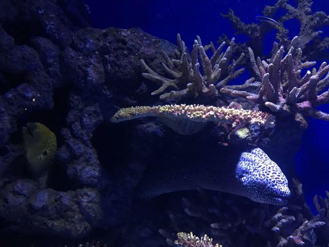 凱恩斯水族館