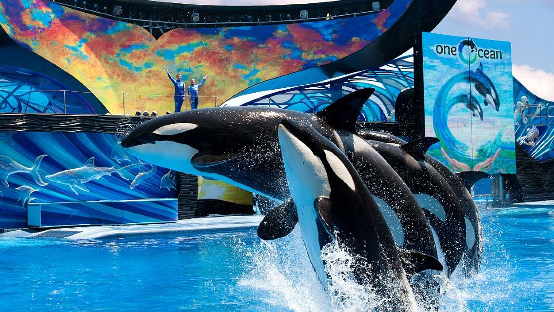 May Special 20% Off! | Seaworld Orlando Any-Day Ticket