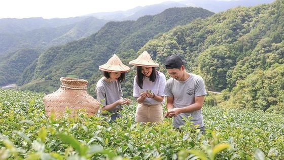 Private 1-Day Tea Experience in Taipei
