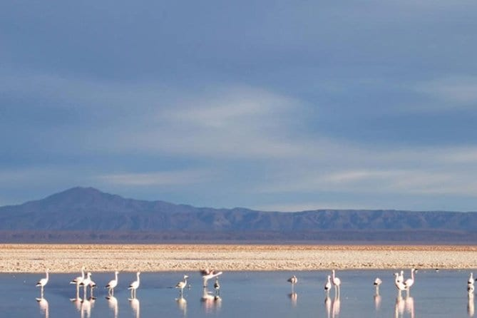 Atacama Salt Flat and Toconao Town Tour