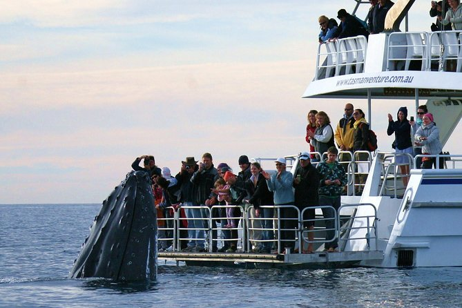 Hervey Bay Whale Watching Cruise