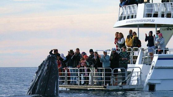 Hervey Bay Whale Watching Cruise