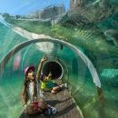 Skip the Line: Zoo Miami Ticket with Optional Upgrade
