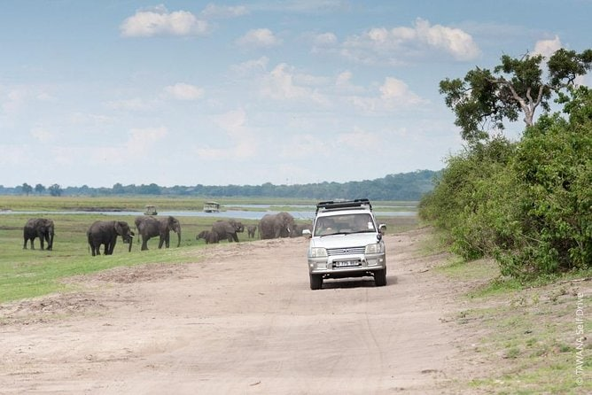 Self drive adventure in Chobe park