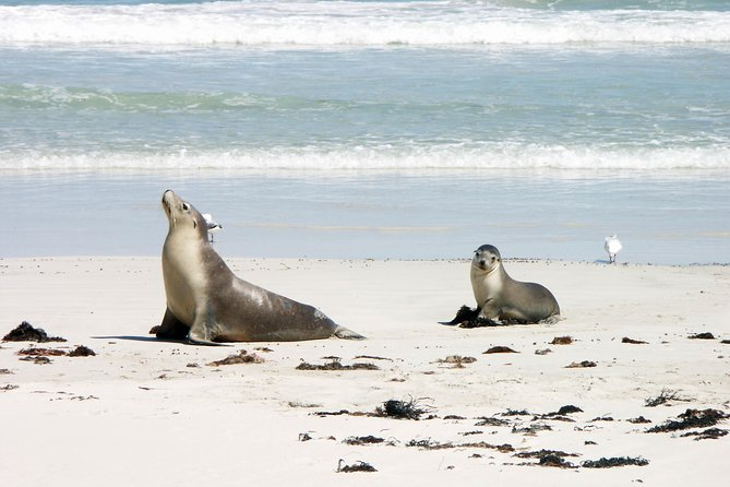 Kangaroo Island Personal Group Tours