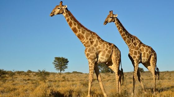 Safari Private Half Day Tour from Durban