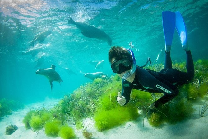 Half-Day Sea Lion Snorkeling Tour from Port Lincoln