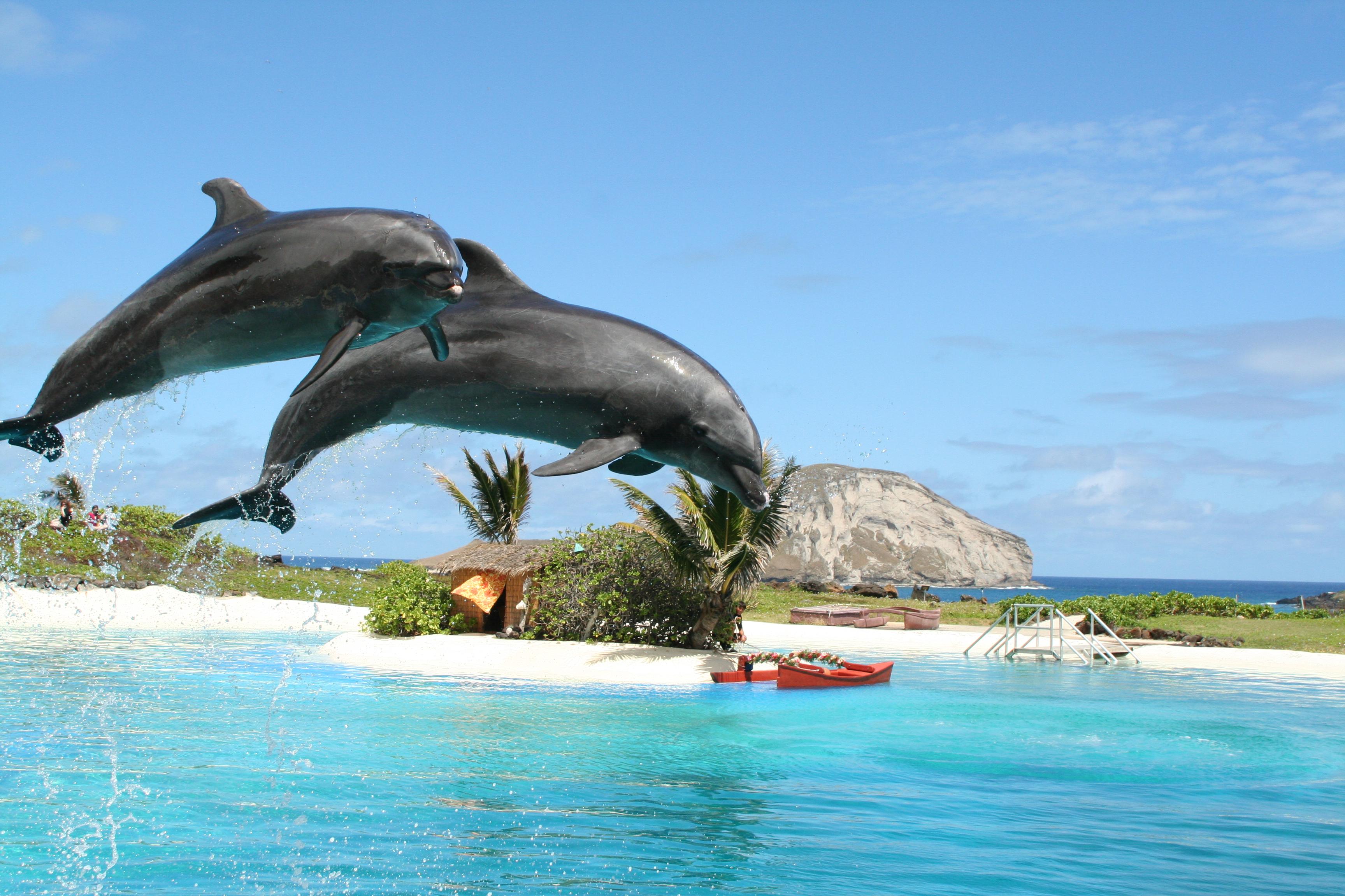 夏威夷海洋公園一日遊(接送)