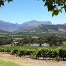 Cape of Good Hope and Cape Winelands Day Tour from Cape Town