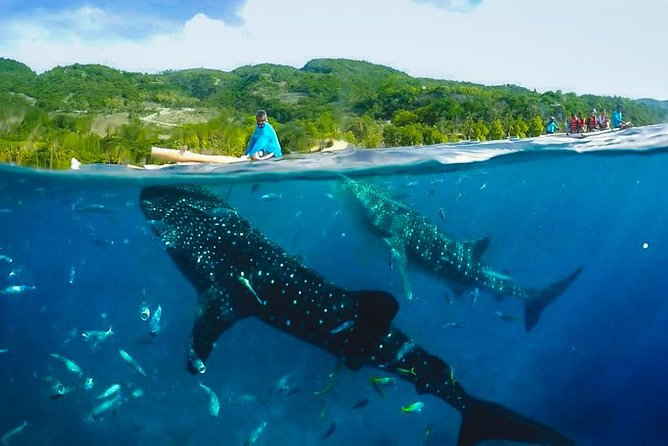 Canyoneering with Whaleshark - SHARED TOUR