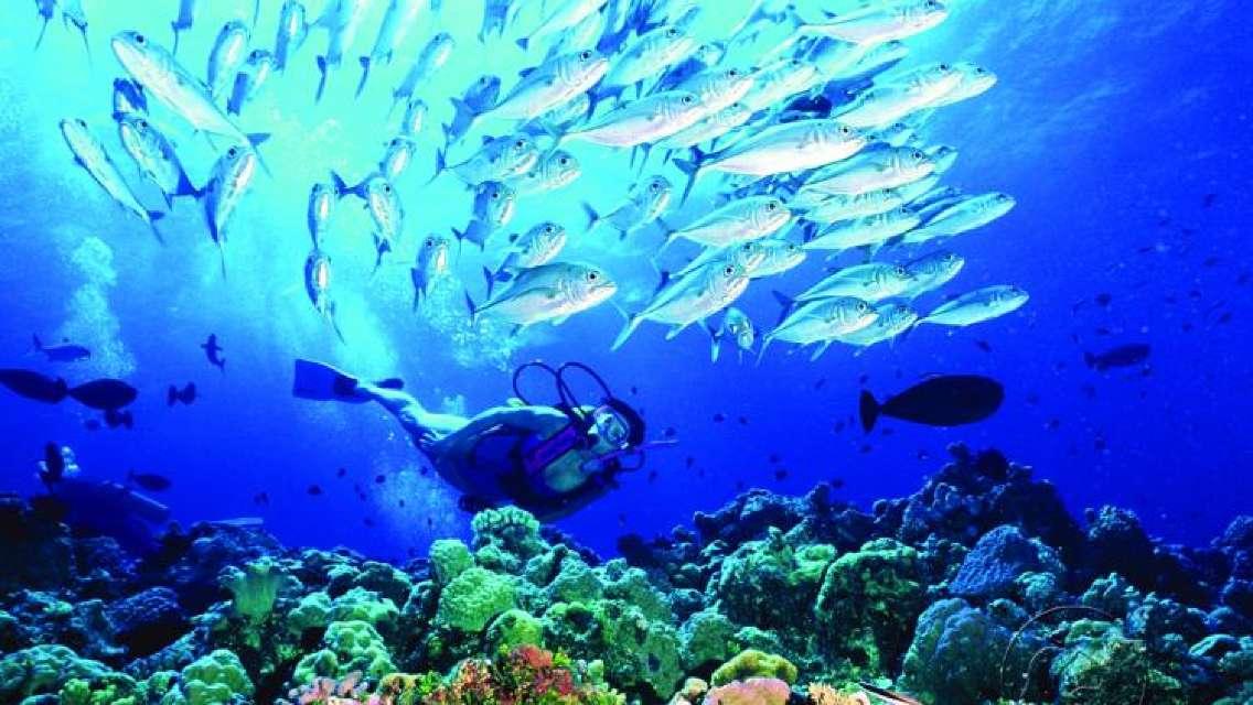 凱恩斯外堡礁8天7晚船宿/舒適船宿(含22次持證潜水+4次持證夜潛+五星 PADI 潜水嚮導)