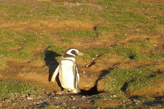 Boat Navigation to Magdalena Island Penguin Reserve from Punta Arenas