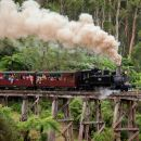 Melbourne Combo: Great Ocean Road, Puffing Billy, Moonlit Sanctuary & Penguins
