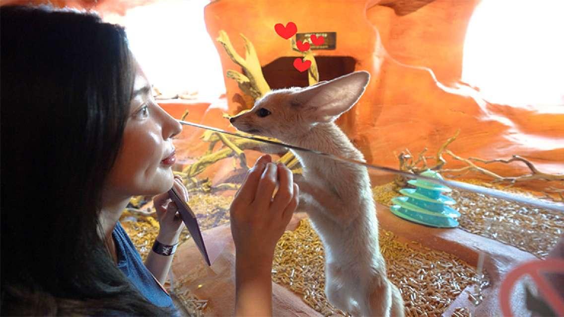 [Seoul Yeongdeungpo] Zoolung Zoolung Indoor Animal Theme Park Ticket