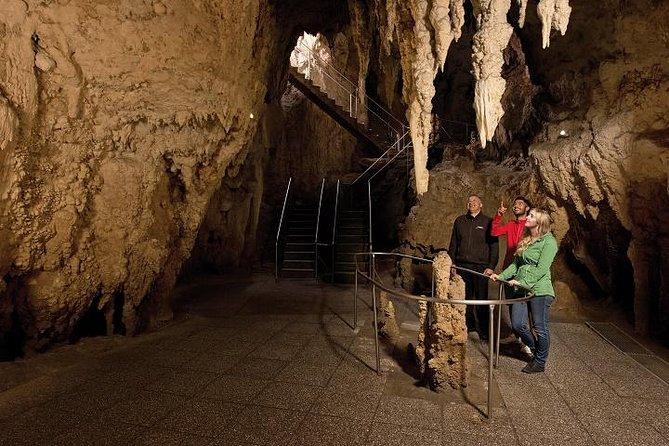 Waitomo Caves and The Kiwi House Group Tour