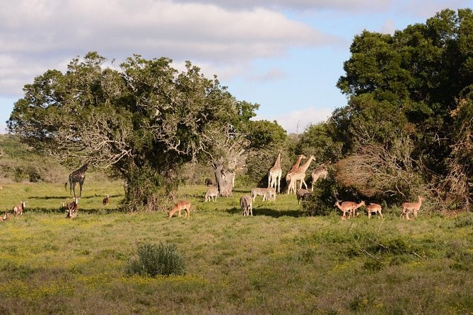 Addo Elephant National Park and Schotia Private Game Reserve