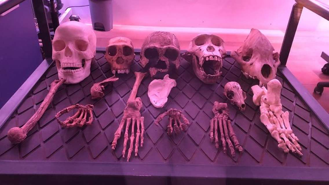 Cradle of Humankind, Maropeng and Sterkfontein Caves Tour