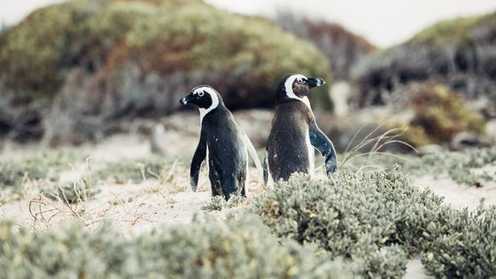 Full-Day Cape Peninsula and Penguin Colony Tour from Cape Town