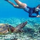 Oahu Grand Circle Tour with Snorkeling with the Turtles