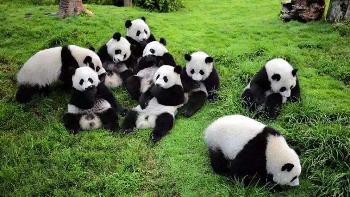 Chengdu Panda Leshan Giant Buddha Emei Mountain 2 Days Trip