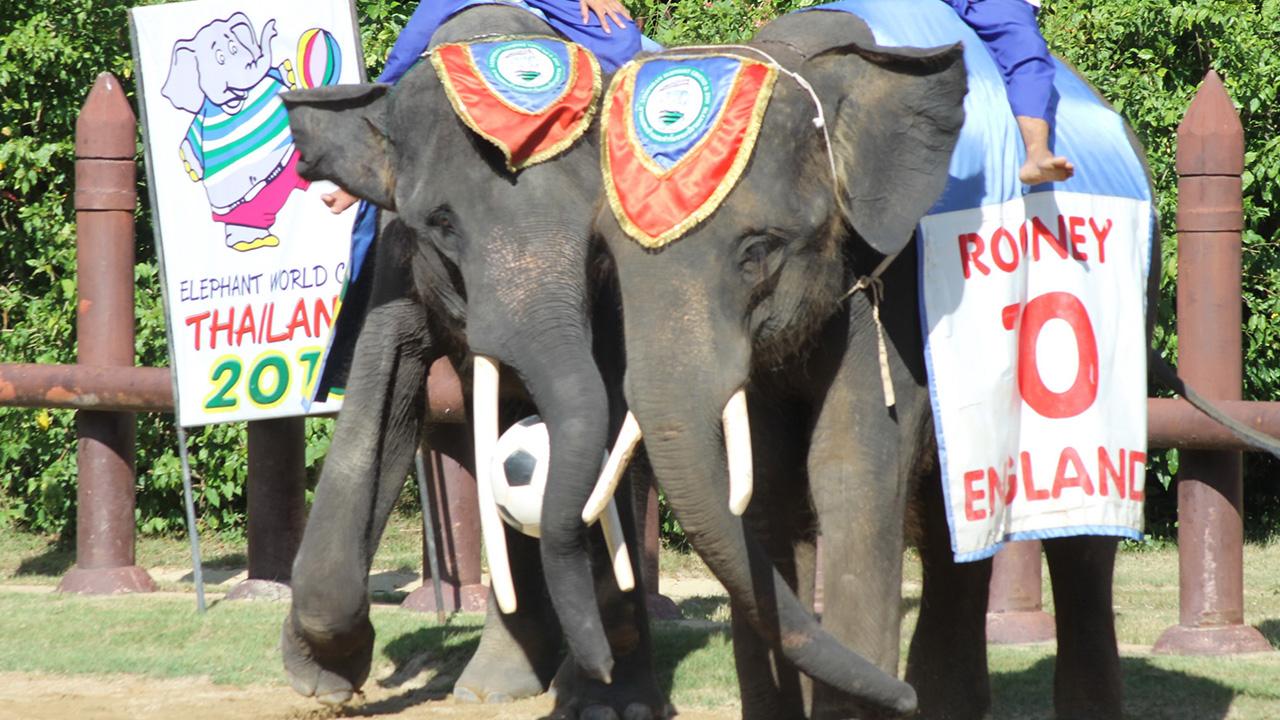 방콕 삼프란 코끼리 동물원 입장권