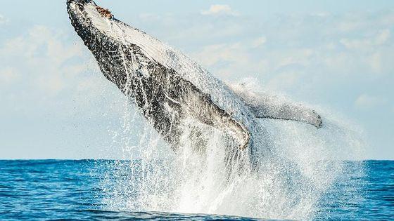 Premier Whale Watching Byron Bay