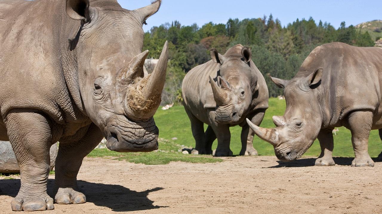 聖地亞哥野生動物園門票