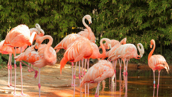 11% Off | Guangzhou Chimelong Birds Park Ticket