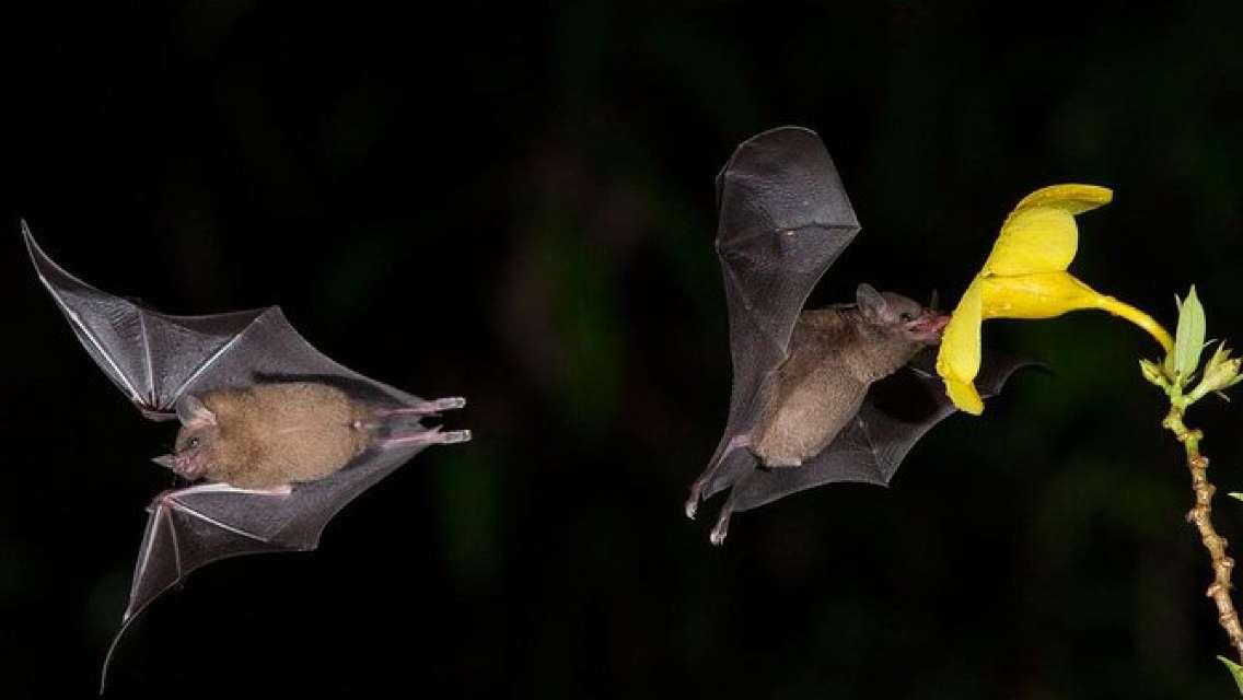 Bat tour at Monteverde Santa Elena