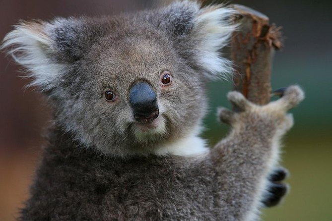 Yarra Valley Wildlife & Wine Day Tour from Melbourne with Healesville Sanctuary