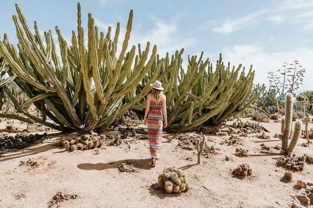 墨爾本包車一日遊 - Shepparton 小鎮+Cactus Country 仙人掌王國(中文包車司導講解)