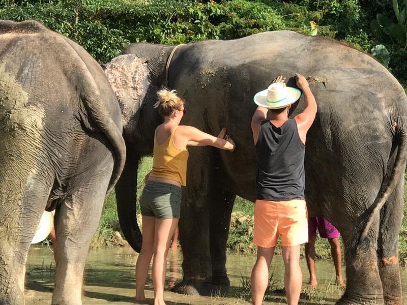 泰國甲米府奧南大象保護區 餵食大象 給大象做泥浴spa半日遊(好玩新發現)