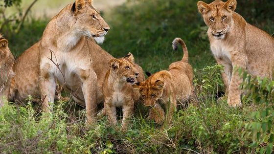 Half Day Sunrise Game-Drive of National Park Tour From Nairobi