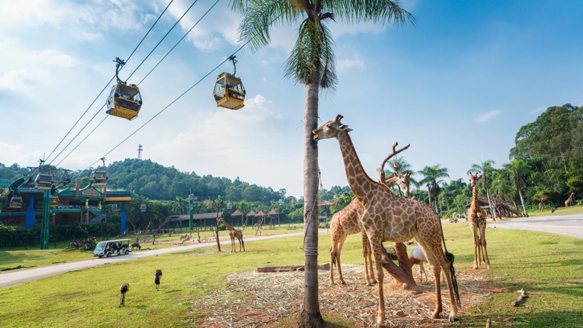 廣州親子景點   長隆野生動物世界門票