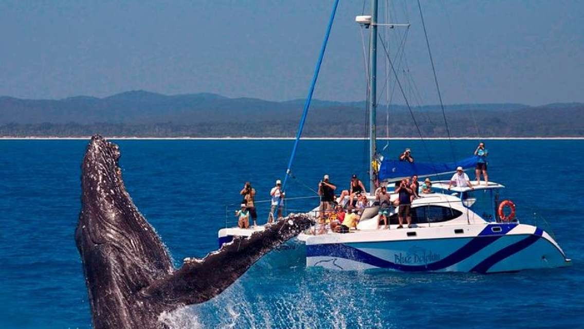Blue Dolphin Exclusive Whale Watch Encounters