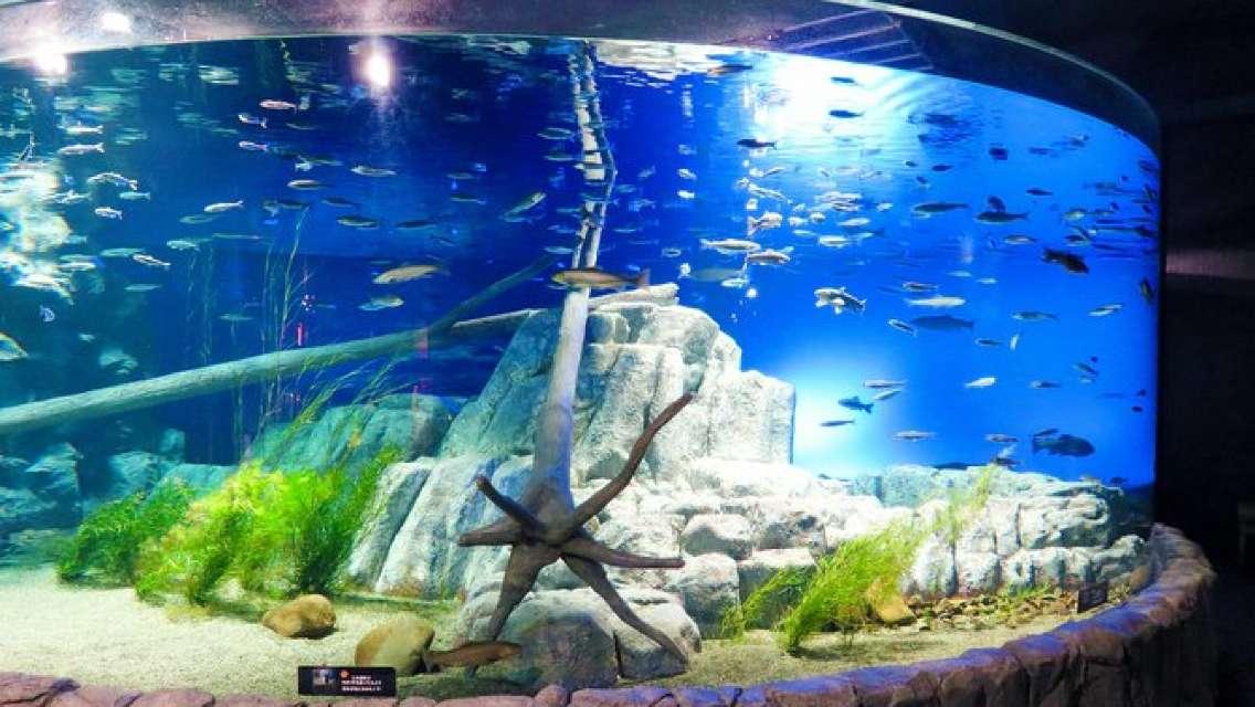 Chitose Salmon Aquarium Admission Ticket