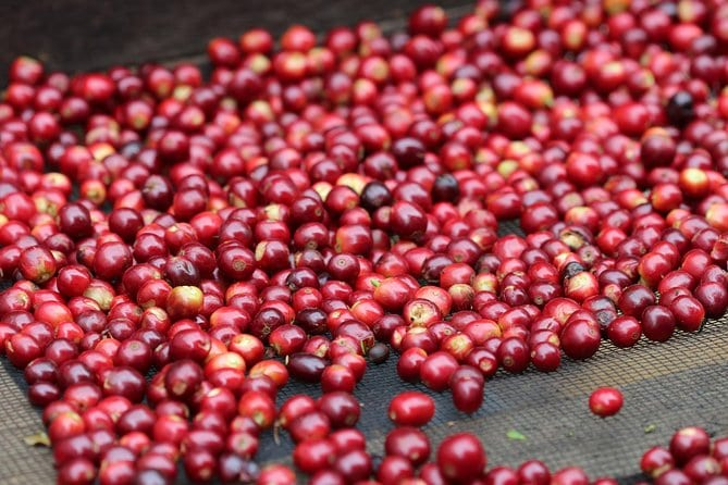 Specialty Coffee 101, History - Processing - Professional Cupping and More!