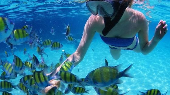 From Dubai: Snorkeling trip with live BBQ lunch in Fujairah