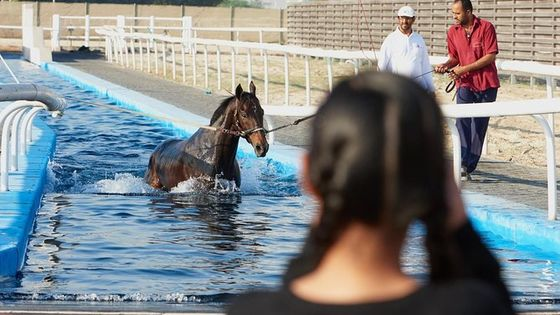 Racehorse Stable tour with Breakfast at Meydan Racecourse