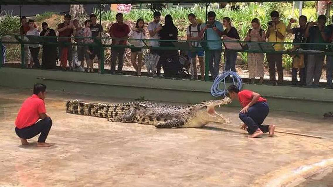 Crocodile Adventureland Langkawi Admission Ticket