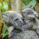Hobart's best: city, nature, wildlife, and fine cuisine