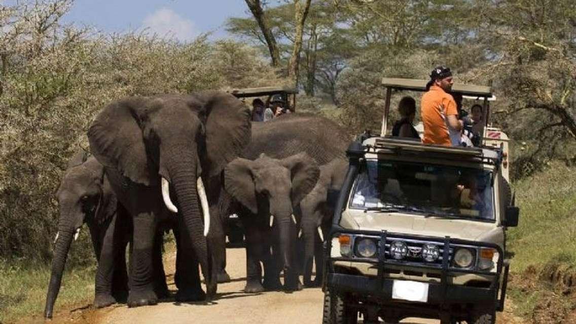 5 Day Best Camping Safari in Tanzania Parks